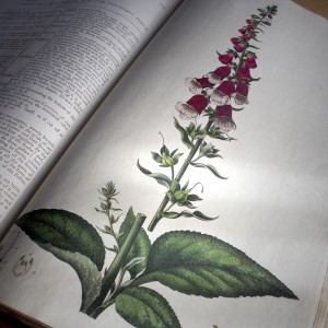 Flora Londinensis (William Curtis, 1777)